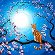 Creamsicle Kitten In Blue Moonlight Poster