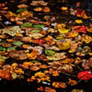 Creek Leaves Poster