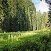 Crescent Meadow In Sequoia Poster