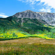 Crested Butte Aspens Poster