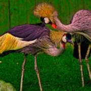 Crested Cranes Poster