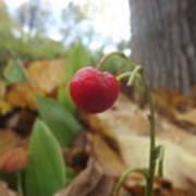 Crimson Berry Poster