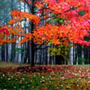 Crimson Tree Poster