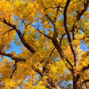 Crisp Autumn Day Poster