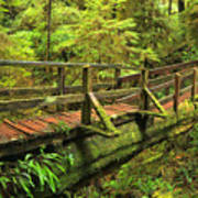 Crossing The Rainforest Ravine Poster