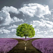 Crossroad In Lavender Meadow Poster