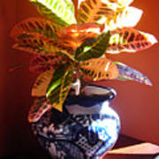 Croton In Talavera Pot Poster