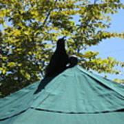 Crow On An Umbrella Poster