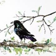 Crow On Branch Poster