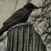 Crow Perched On A Old Column In Rain Poster
