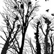 Crows Roost 1 - Black And White Poster