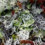 Crushed Lichen Poster