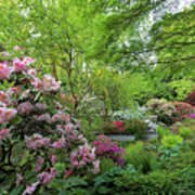 Crystal Springs Rhododendron Garden In Bloom Poster