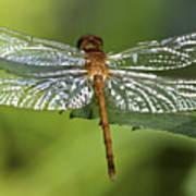 Crystal Wings Poster