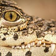 Cuban Croc Smile Poster