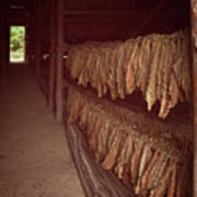 Cuban Tobacco Shed Poster