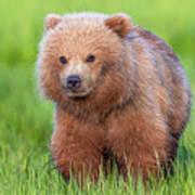 Cuddly Bear Cub Poster