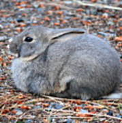 Cuddly Campground Bunny Poster