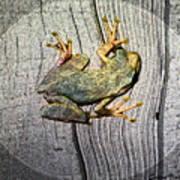 Cudjoe Key Frog Poster