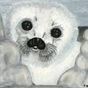 Curious Arctic Seal Pup Poster