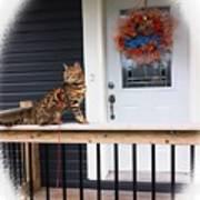 Curious Bengal Cat Poster