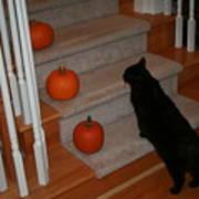 Curious Black Cat Poster