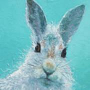 Curious Grey Rabbit Poster