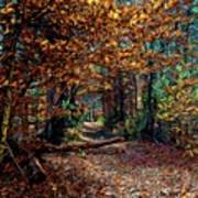 Curious Path In Autumn Poster