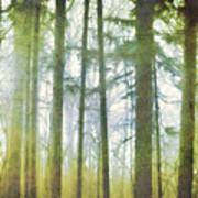 Curtain Of Morning Light Poster