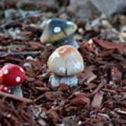 Cluster Of Toadstools  In Fairy Garden Poster