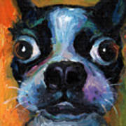 Cute Boston Terrier Puppy Art Poster by Svetlana Novikova