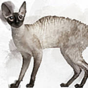 Cute Cornish Rex Youngster Poster