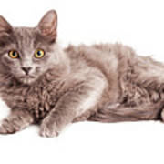 Cute Kitten Laying Over White Loking Forward Poster