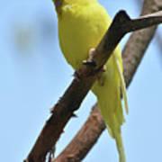 Cute Little Parakeet Resting On A Branch Poster