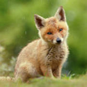 Cute Overload Series - Best Baby Fox Ever Poster