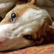 Cute Puppy Cuddles Poster