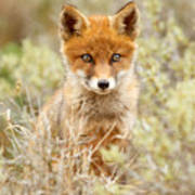 Cute Red Fox Kit Poster