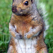 Cute Squirrel In The Park  Poster