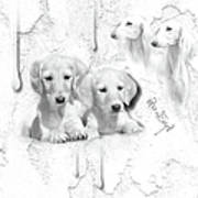 Cute White Salukis With Puppies Poster