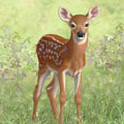 Cute Whitetail Deer Fawn Poster