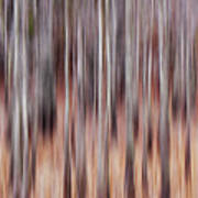 Cypress Grove Abstract Poster