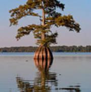 Cypress Tree On Reelfoot Lake Poster