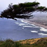 Cypress View Poster