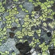 D07343-dc Lichen On Rock Poster
