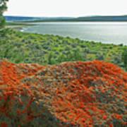 Da5869 Lichen Covered Rock Poster