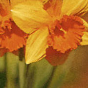 Daffodil Delights Poster