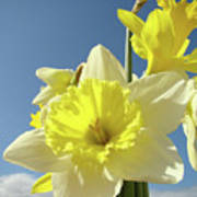 Daffodil Flowers Artwork Floral Photography Spring Flower Art Prints Poster