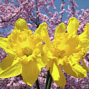 Daffodil Flowers Spring Pink Tree Blossoms Art Prints Baslee Troutman Poster