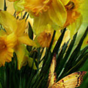Daffodils - First Flower Of Spring Poster