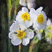 Daffodils In My Garden Poster
